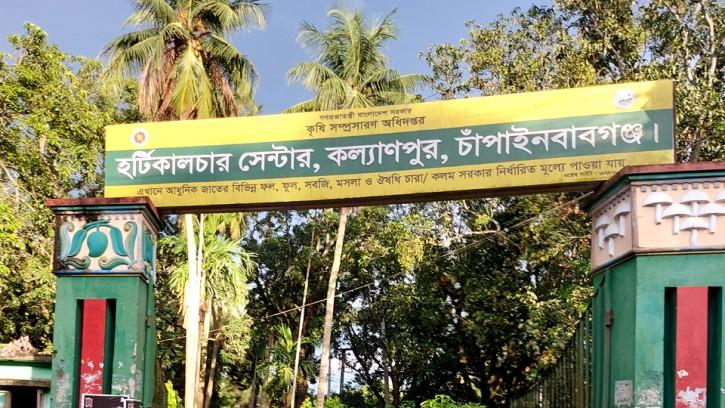 চাঁপাইনবাবগঞ্জে নতুন জাতের আম, 'ইলামতি' নাম রাখার প্রস্তাব